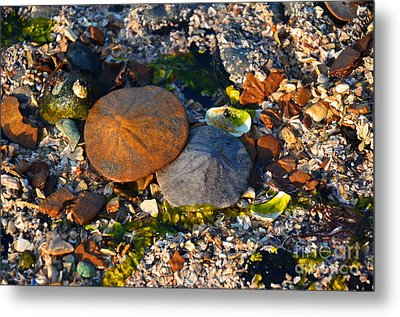 Low Tide Lovers Metal Print