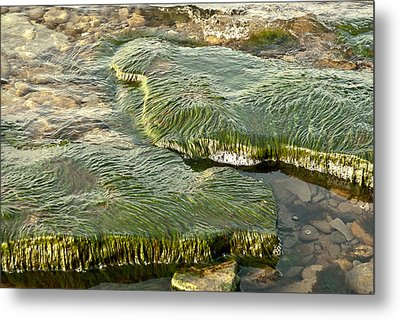 Low Water Algae Metal Print by Lena Wilhite