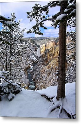 Lower Yellowstone Falls In October Metal Print by Robert Woodward