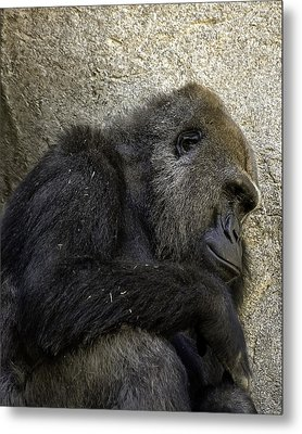 Metal Print featuring the photograph Lowland Gorilla by Gary Neiss