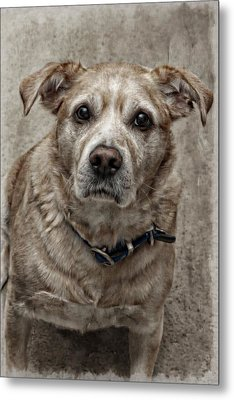 Metal Print featuring the photograph Loyalty  by Aaron Berg