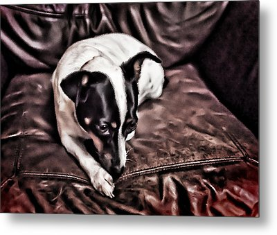 Lucie On Leather Metal Print by Patrick M Lynch