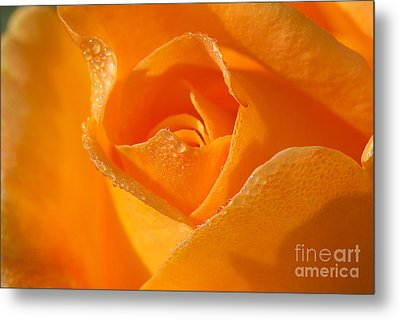 Lucille's Rose Metal Print