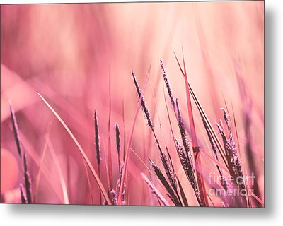 Luminis - S09c - Pink Metal Print by Variance Collections