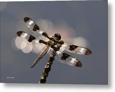 Luminous Dragonfly Metal Print by Christina Rollo