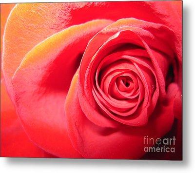 Luminous Red Rose 1 Metal Print