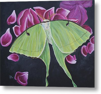 Luna Moth Metal Print by Jaime Haney