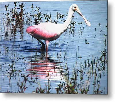 Lunch At The Lake Metal Print by Will Boutin Photos