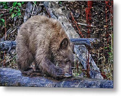 Metal Print featuring the photograph Lunch Break by Jim Thompson