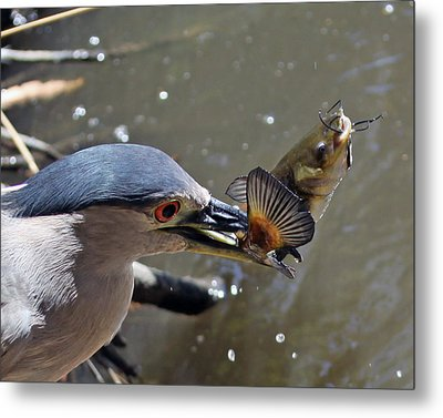Lunch Is Served Metal Print by Shoal Hollingsworth