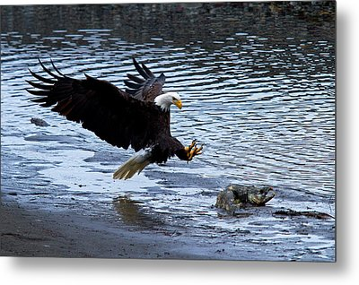 Lunch Landing Metal Print