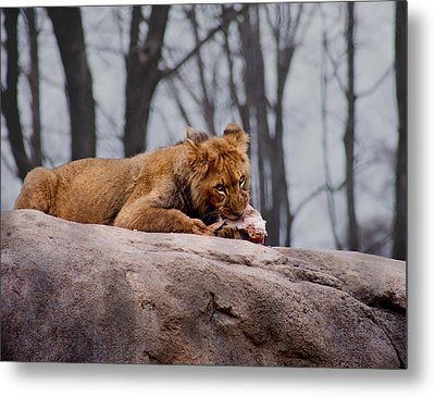 Metal Print featuring the photograph Lunch Time by Courtney Webster