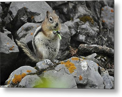 Lunch Time Metal Print by Sandy Molinaro