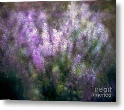 Lupine By The River  Metal Print by Kevin Felts