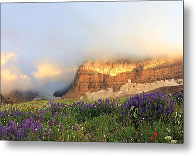 Lupine Wildflowers On Mount Timpanogos Metal Print by Johnny Adolphson