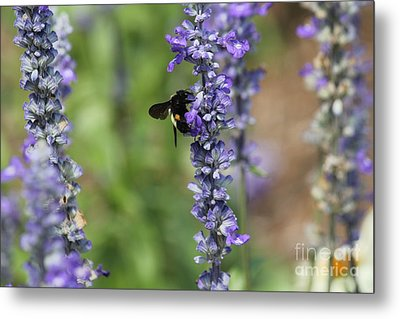 Lupine With Friend Metal Print by Theresa Willingham