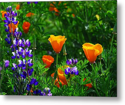 Lupines And Poppies Metal Print