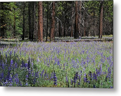 Metal Print featuring the photograph Lupines In Yosemite Valley by Lynn Bauer