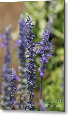 Lupines Metal Print by Theresa Willingham