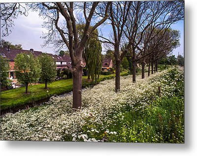 Luscious Spring Bloom In Holland Metal Print by Jenny Rainbow