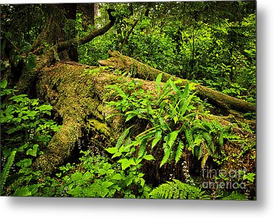 Lush Temperate Rainforest Metal Print by Elena Elisseeva