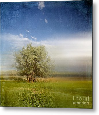 Lyrical Tree - 01bt01aa Metal Print by Variance Collections