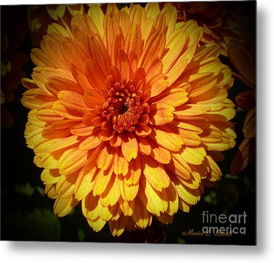 M Bright Orange Flowers Collection No. Bof8 Metal Print by Monica C Stovall