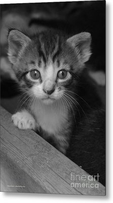 M Kitten Metal Print by Tannis  Baldwin