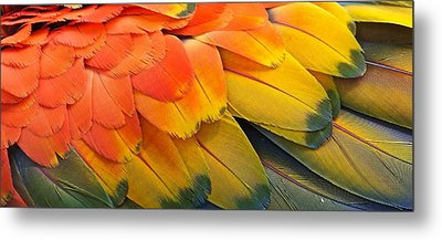 Macaw Yellow Metal Print by Colleen Renshaw