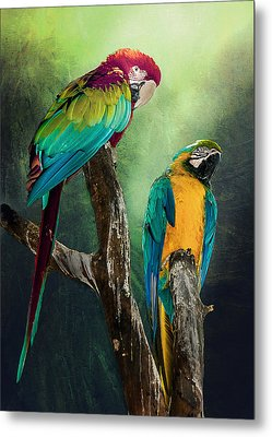 Metal Print featuring the photograph Macaws Siesta Time by Brian Tarr