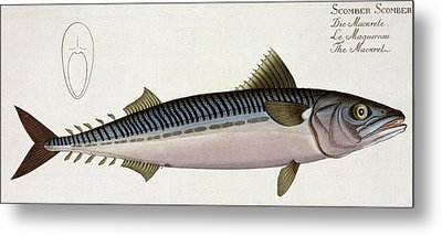 Mackerel Metal Print