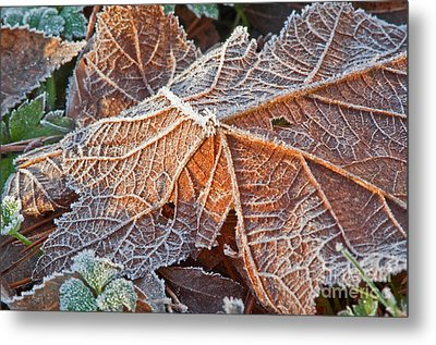 Macro Nature Image Of Fallen Leaf With Frost Metal Print