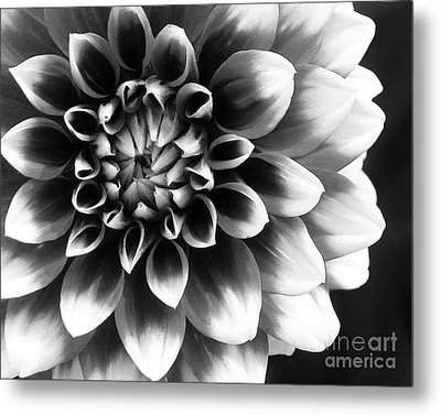 Metal Print featuring the photograph Mad About You by Kathi Mirto