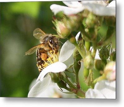 Mad Honeybee Metal Print