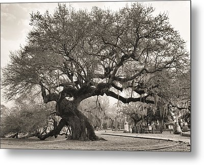 Magestic And Aged Metal Print by Phyllis Peterson