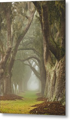 Magic Forest Metal Print by Barbara Northrup