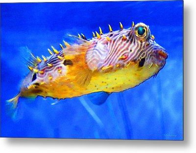 Magic Puffer - Fish Art By Sharon Cummings Metal Print by Sharon Cummings