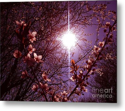 Magical Blossoms Metal Print by Vicki Spindler