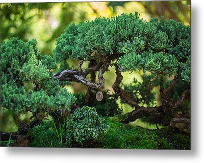 Metal Print featuring the photograph Magical Bonsai by Julie Andel