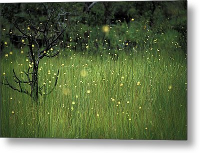 Metal Print featuring the photograph Magical Land by Lana Enderle