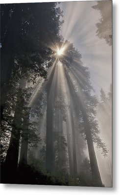 Magical Morning Metal Print by Betty Depee