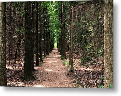 Metal Print featuring the photograph Magical Path by Bruce Patrick Smith