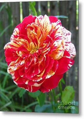 Magical Rose Metal Print