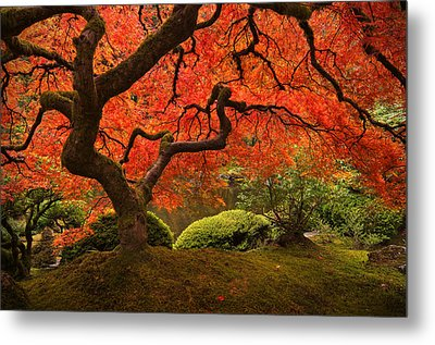 Magical Tree Metal Print by Bjorn Burton