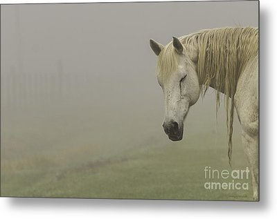 Magical White Horse Metal Print by Cindy Bryant