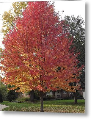 Magnificent Maple Metal Print by Bill Woodstock