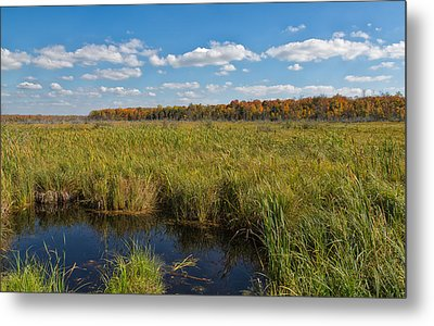 Magnificent Minnesota Marshland Metal Print
