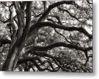 Metal Print featuring the photograph Magnificent Oaks Of Louisiana by Photography  By Sai
