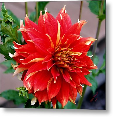 Metal Print featuring the photograph Magnifique by Jeanette C Landstrom