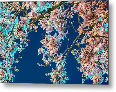 Magnolia-greenlight Metal Print by Susan Cole Kelly Impressions